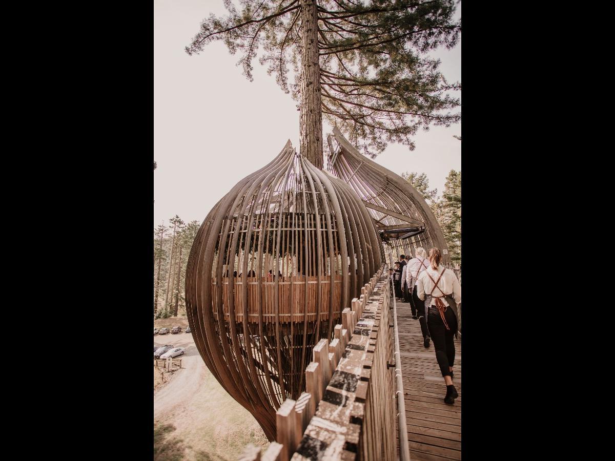 Stunning Treehouse Venue  image 6